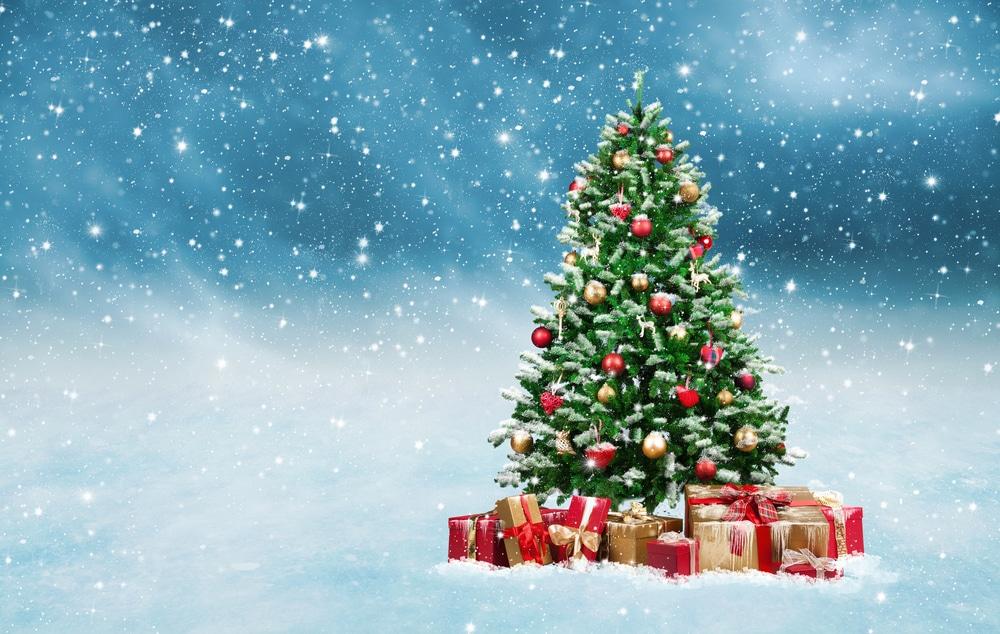 xmas tree and snow